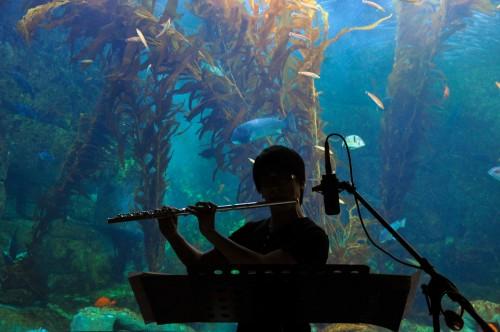 Birch Aquarium at Scripps kicks off its third annual musical program Immersion at  the aquarium.