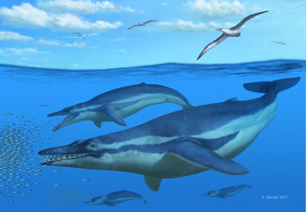 Ancient Fossils Suggest Whales Used Teeth To Filter Out Prey